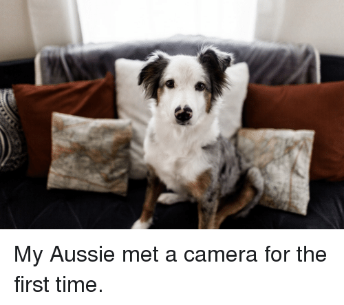 Wtf Is That: My Aussie met a camera for the first time.