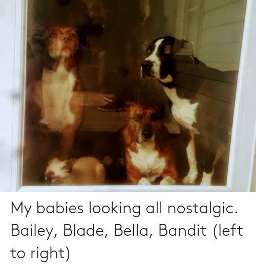 bella: My babies looking all nostalgic. Bailey, Blade, Bella, Bandit (left to right)