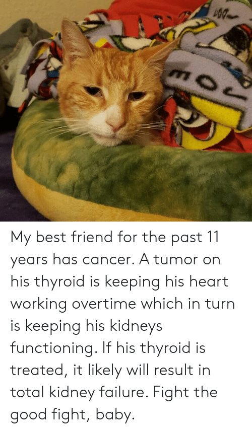 Best Friend, Best, and Cancer: My best friend for the past 11 years has cancer. A tumor on his thyroid is keeping his heart working overtime which in turn is keeping his kidneys functioning. If his thyroid is treated, it likely will result in total kidney failure. Fight the good fight, baby.