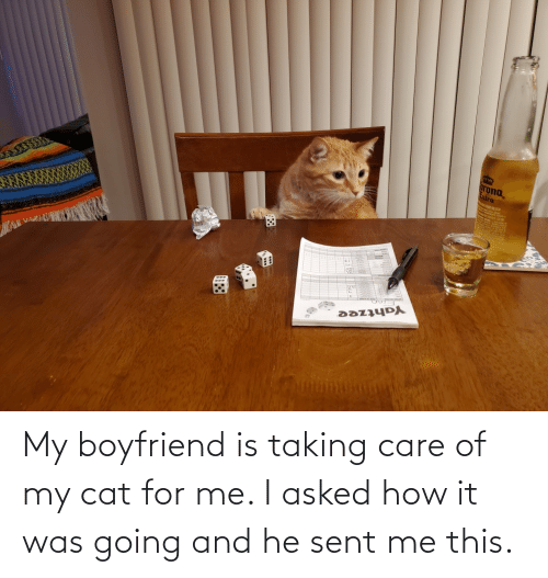 Me I: My boyfriend is taking care of my cat for me. I asked how it was going and he sent me this.