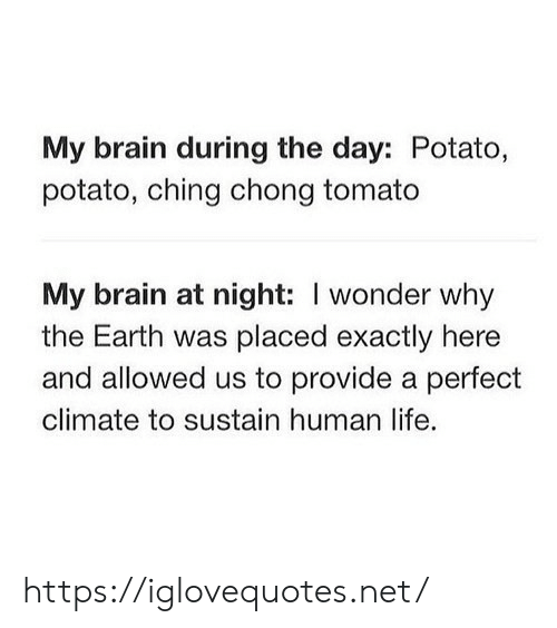 Human Life: My brain during the day: Potato,  potato, ching chong tomato  My brain at night: I wonder why  the Earth was placed exactly here  and allowed us to provide a perfect  climate to sustain human life. https://iglovequotes.net/