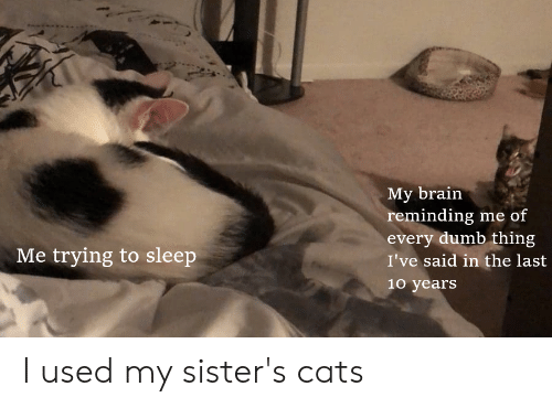 Cats, Dumb, and Reddit: My brain  reminding me of  every dumb thing  Me trying to sleep  I've said in the last  10 years I used my sister's cats