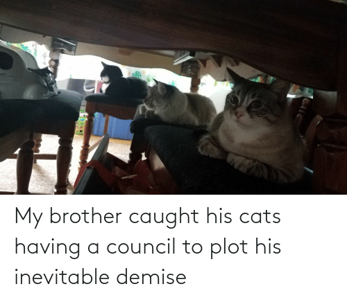 Having: My brother caught his cats having a council to plot his inevitable demise