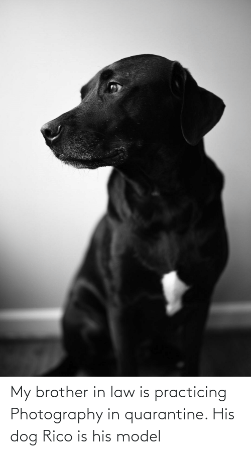 rico: My brother in law is practicing Photography in quarantine. His dog Rico is his model
