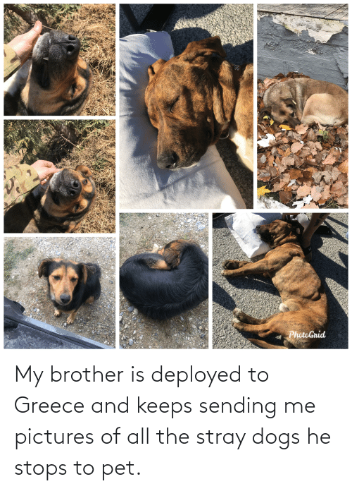 He Stops: My brother is deployed to Greece and keeps sending me pictures of all the stray dogs he stops to pet.