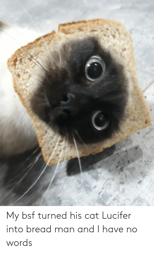 Lucifer: My bsf turned his cat Lucifer into bread man and I have no words