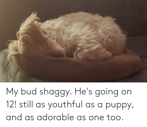 shaggy: My bud shaggy. He's going on 12! still as youthful as a puppy, and as adorable as one too.