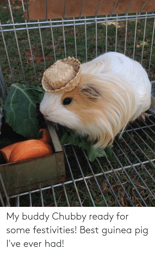 Ever Had: My buddy Chubby ready for some festivities! Best guinea pig I've ever had!