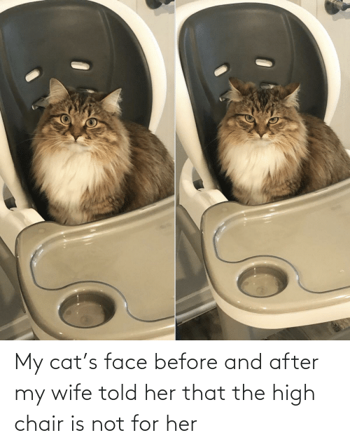Chair: My cat's face before and after my wife told her that the high chair is not for her