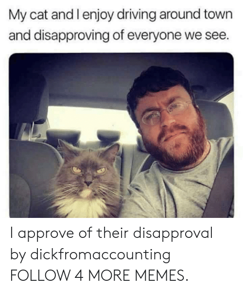 Approve Of: My cat and l enjoy driving around town  and disapproving of everyone we see. I approve of their disapproval by dickfromaccounting FOLLOW 4 MORE MEMES.