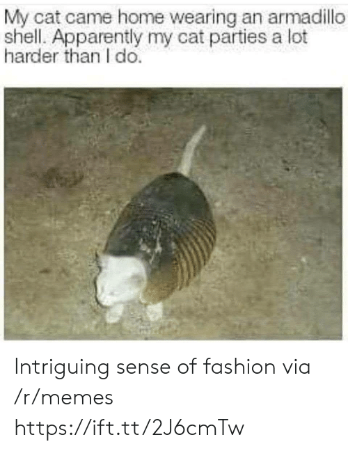 armadillo: My cat came home wearing an armadillo  shell. Apparently my cat parties a lot  harder than I do. Intriguing sense of fashion via /r/memes https://ift.tt/2J6cmTw