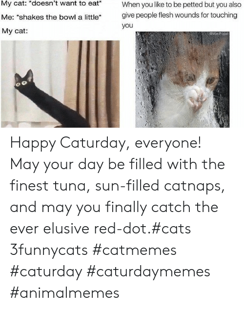 "Cats, Caturday, and Happy: My cat: *doesn't want to eat*  When you like to be petted but you also  give people flesh wounds for touching  Me: ""shakes the bowl a little*  you  My cat:  GMaP Happy Caturday, everyone! May your day be filled with the finest tuna, sun-filled catnaps, and may you finally catch the ever elusive red-dot.#cats 3funnycats #catmemes #caturday #caturdaymemes #animalmemes"