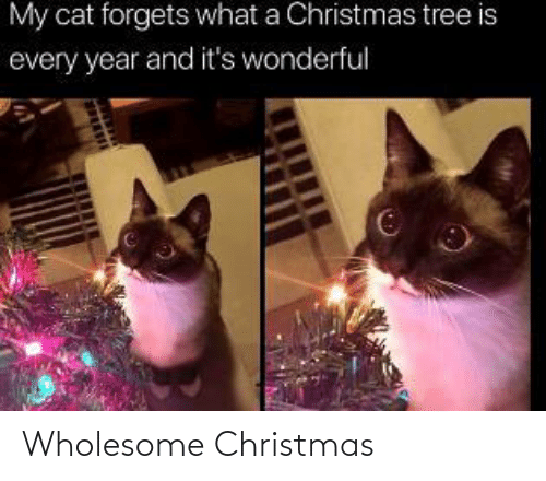 wonderful: My cat forgets what a Christmas tree is  every year and it's wonderful Wholesome Christmas