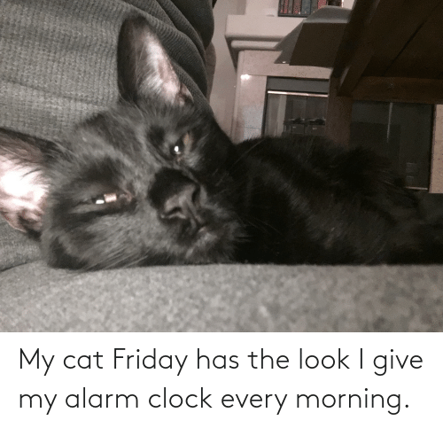 the look: My cat Friday has the look I give my alarm clock every morning.