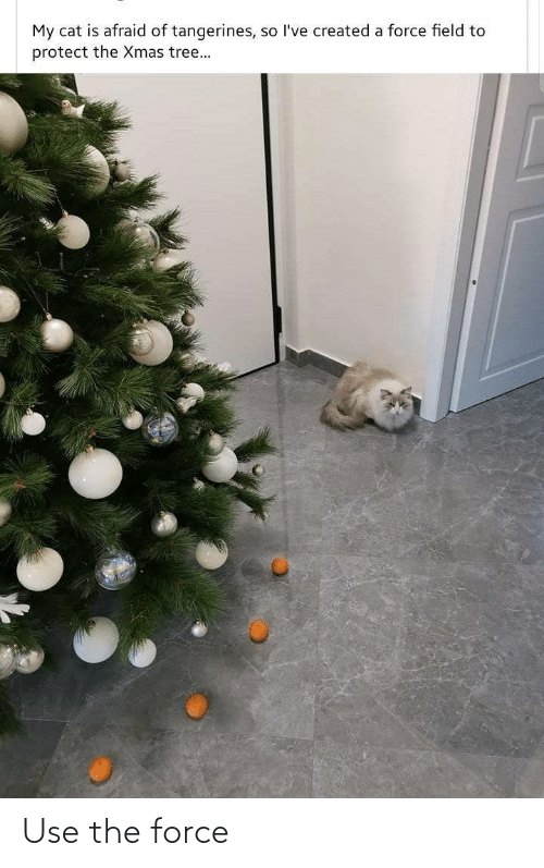 Created: My cat is afraid of tangerines, so l've created a force field to  protect the Xmas tree... Use the force