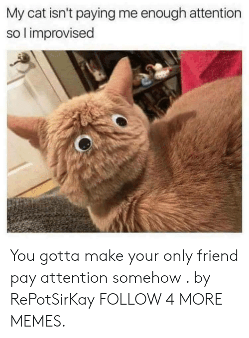 Dank, Memes, and Target: My cat isn't paying me enough attention  so l improvised You gotta make your only friend pay attention somehow . by RePotSirKay FOLLOW 4 MORE MEMES.