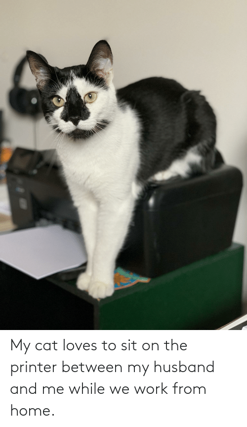 My Husband: My cat loves to sit on the printer between my husband and me while we work from home.