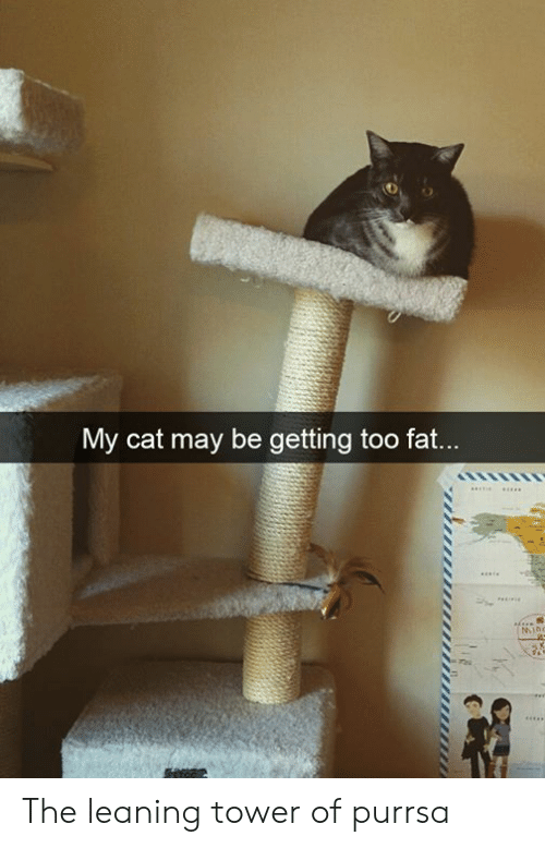 Leaning: My cat may be getting too fat...  MIno The leaning tower of purrsa