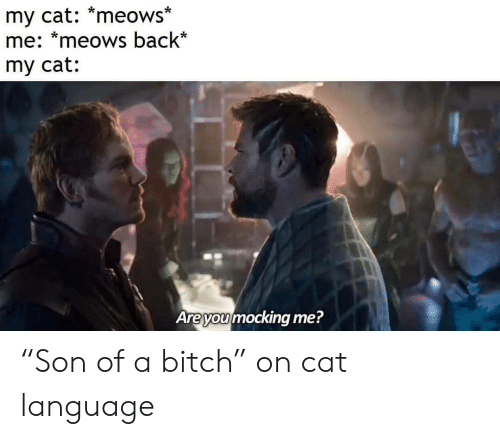 "Are You Mocking Me: my cat: *meows*  me: *meows back*  my cat:  Are you mocking me? ""Son of a bitch"" on cat language"