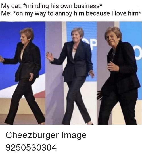 annoy: My cat: *minding his own business*  Me: *on my way to annoy him because I love him* Cheezburger Image 9250530304