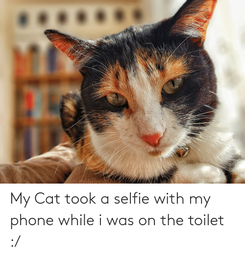 On The Toilet: My Cat took a selfie with my phone while i was on the toilet :/
