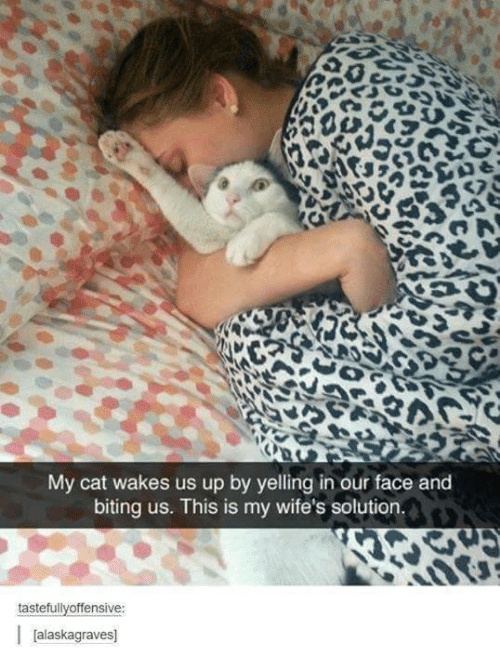 biting: My cat wakes us up by yelling in our face and  biting us. This is my wife's solution.  tastefullyoffensive:  Jalaskagraves