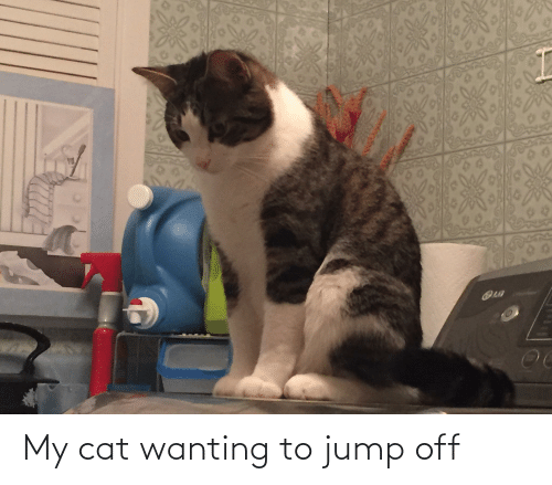 Jump Off: My cat wanting to jump off