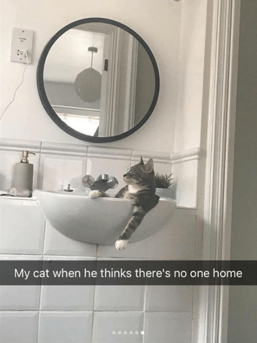 Memes, Home, and 🤖: My cat when he thinks there's no one home