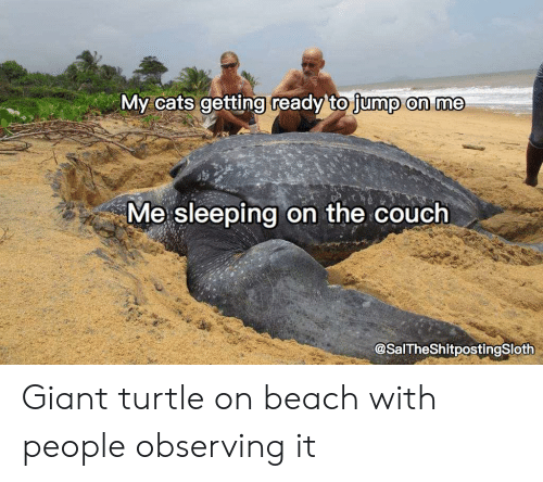 Cats, Beach, and Couch: My cats getting ready'to jump on me  Me sleeping on the couch  @SalTheShitpostingSloth Giant turtle on beach with people observing it