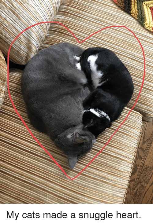 Cats, Heart, and They: My cats made a snuggle heart.
