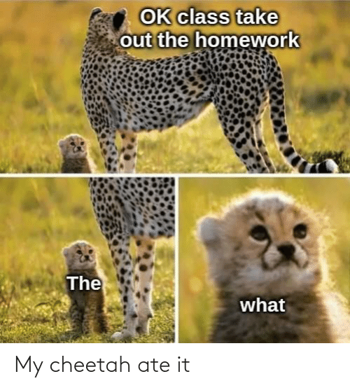 Ate: My cheetah ate it