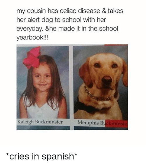 cries in spanish: my cousin has celiac disease & takes  her alert dog to school with her  everyday. &he made it in the school  yearbook!!!  Kaleigh Buckminster  Memphis Bu *cries in spanish*