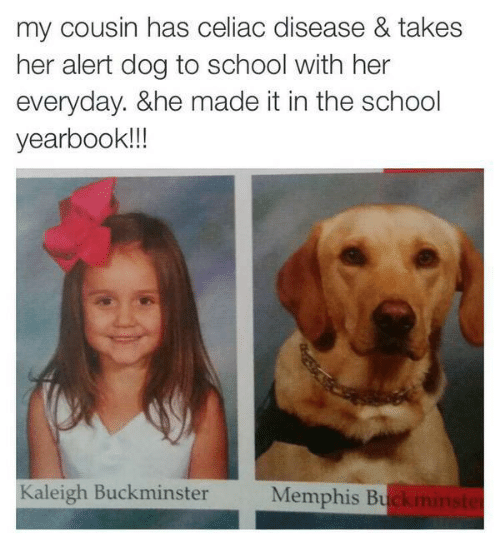 disease: my cousin has celiac disease & takes  her alert dog to school with her  everyday. &he made it in the school  yearbook!!  Kaleigh Buckminster  Memphis Bu