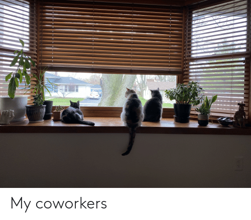 Coworkers: My coworkers