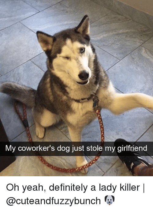 Definitely, Memes, and Yeah: My coworker's dog just stole my girlfriend Oh yeah, definitely a lady killer   @cuteandfuzzybunch 🐶