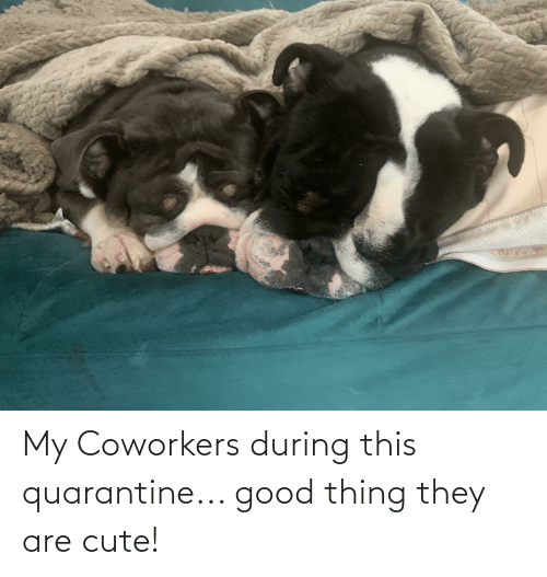 Coworkers: My Coworkers during this quarantine... good thing they are cute!
