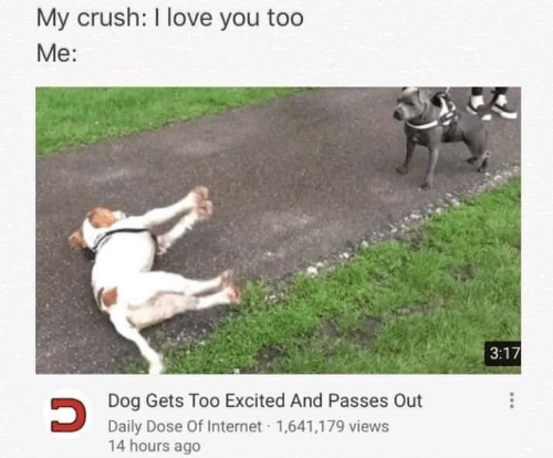 Crush, Internet, and Love: My crush: I love you too  Me:  3:17  Dog Gets Too Excited And Passes Out  Daily Dose Of Internet 1,641,179 views  14 hours ago
