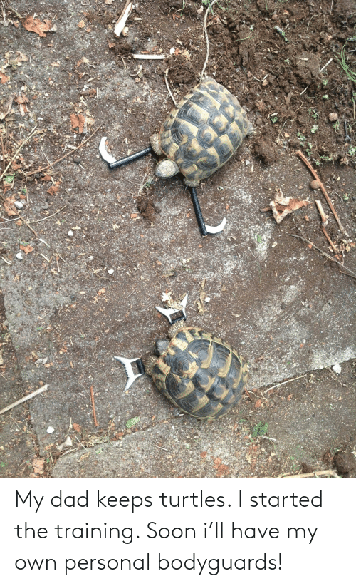 turtles: My dad keeps turtles. I started the training. Soon i'll have my own personal bodyguards!