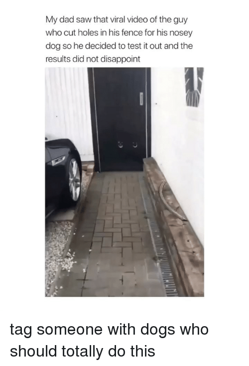 Dad, Dogs, and Saw: My dad saw that viral video of the guy  who cut holes in his fence for his nosey  dog so he decided to test it out and the  results did not disappoint tag someone with dogs who should totally do this