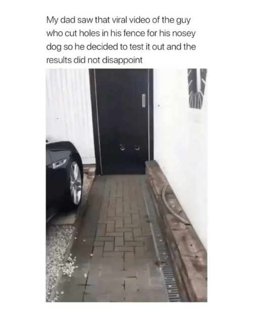 Dad, Memes, and Saw: My dad saw that viral video of the guy  who cut holes in his fence for his nosey  dog so he decided to test it out and the  results did not disappoint