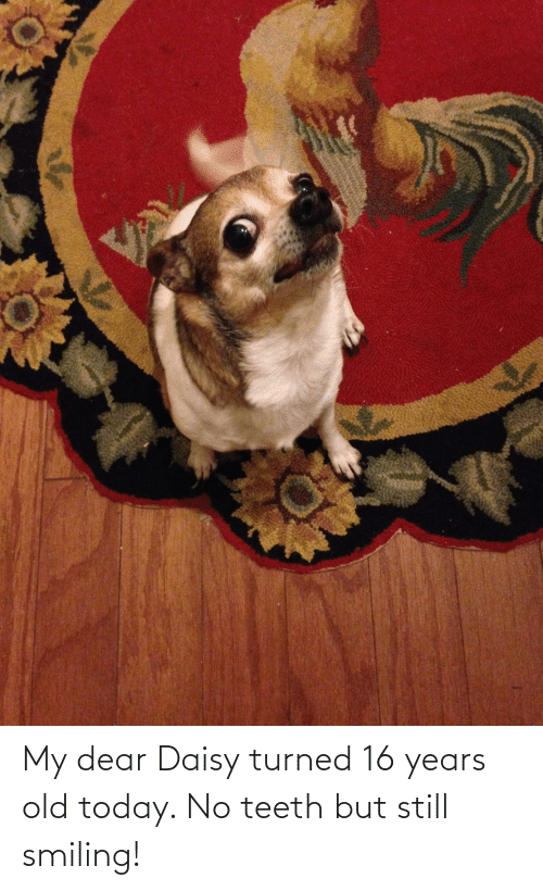 16 years old: My dear Daisy turned 16 years old today. No teeth but still smiling!