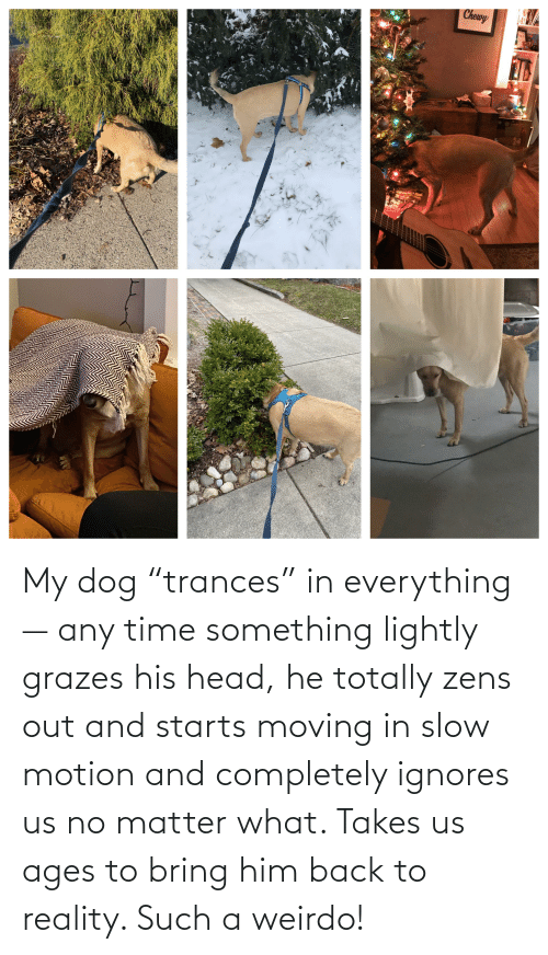 """moving in: My dog """"trances"""" in everything— any time something lightly grazes his head, he totally zens out and starts moving in slow motion and completely ignores us no matter what. Takes us ages to bring him back to reality. Such a weirdo!"""