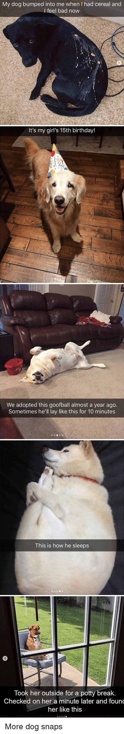 Bad, Birthday, and Girls: My dog bumped into me when I had cereal and  I feel bad now   It's my girl's 15th birthday!   We adopted this goofball almost a year ago.  Sometimes he'll lay like this for 10 minutes   This is how he sleeps   Took her outside for a potty break  Checked on her a minute later and foun  her like this More dog snaps