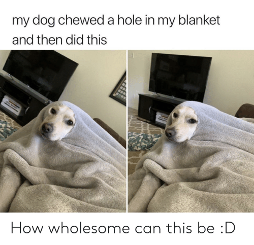 Wholesome, How, and Dog: my dog chewed a hole in my blanket  and then did this How wholesome can this be :D