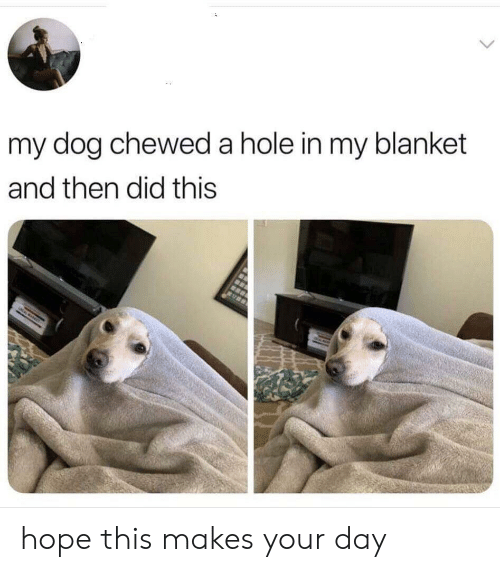 Hope, Dog, and Hole: my dog chewed a hole in my blanket  and then did this hope this makes your day