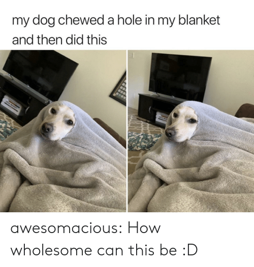 Tumblr, Blog, and Wholesome: my dog cheweda hole in my blanket  and then did this  CAWKE awesomacious:  How wholesome can this be :D