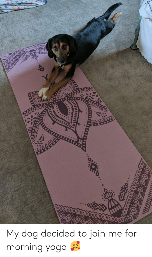 join.me: My dog decided to join me for morning yoga 🥰