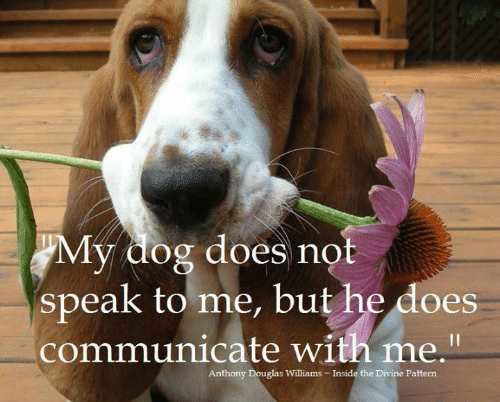 """Memes, 🤖, and Dog: My dog does not  speak to me, but he does  communicate with me.""""  Anthony Douglas Williams Inside the Divine Pattern"""