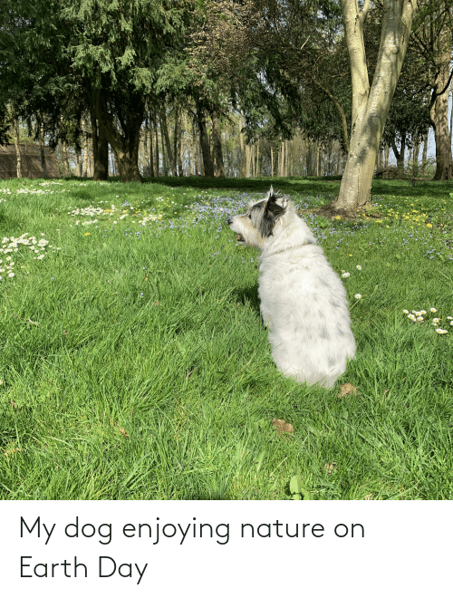 Earth Day: My dog enjoying nature on Earth Day