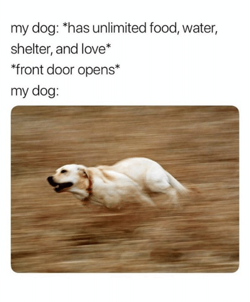 "Food, Love, and Water: my dog: ""has unlimited food, water,  shelter, and love*  ""front door opens*  my dog:"